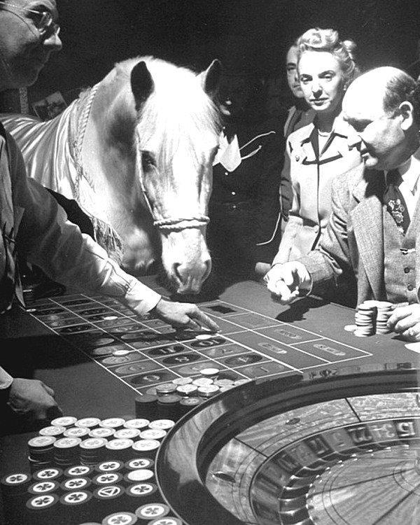 Лошадь-крупье в отеле El Rancho Vegas для привлечения клиентов. Лошадь склоняется до стола в рулетке, толкает фишку на номер носом. 1947 год, США. Весь Мир в объективе, ретро, фотографии