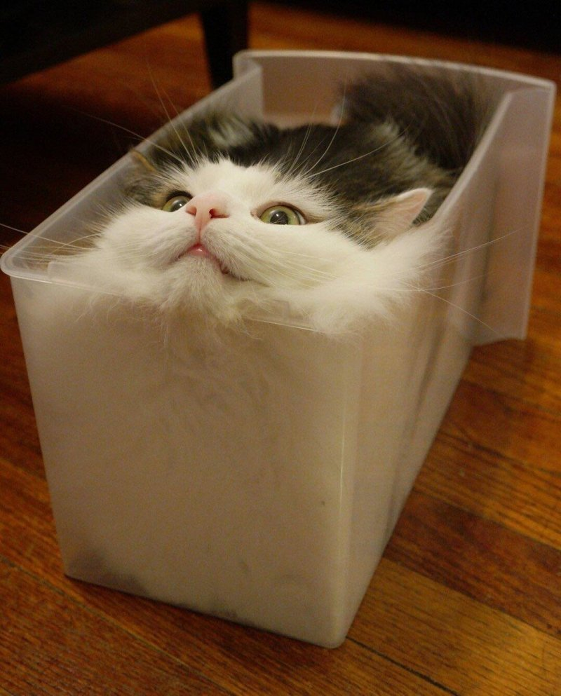 Еще одно доказательство, что коты - жидкость день, животные, кадр, люди, мир, снимок, фото, фотоподборка