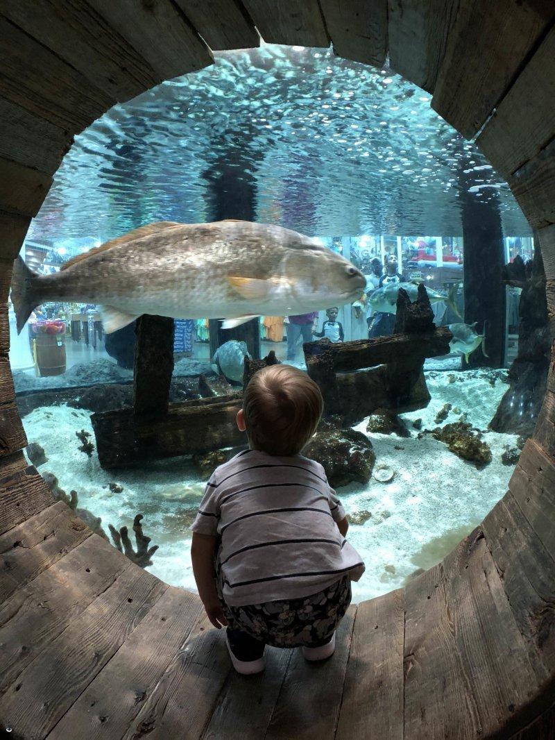 Малыш в океанариуме день, животные, кадр, люди, мир, снимок, фото, фотоподборка