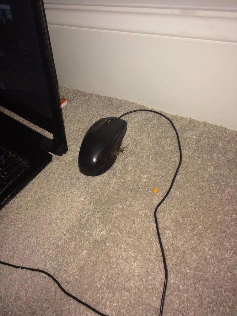 Знаете, ноутбуком можно пользоваться и без мыши в мире, подборка, прикол, странные вещи, удивительно, фото