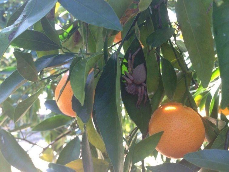 Как насчёт апельсина? в мире, подборка, прикол, странные вещи, удивительно, фото