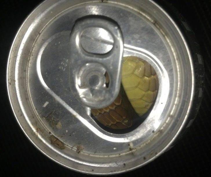 Как бросить пить за 2 секунды в мире, подборка, прикол, странные вещи, удивительно, фото