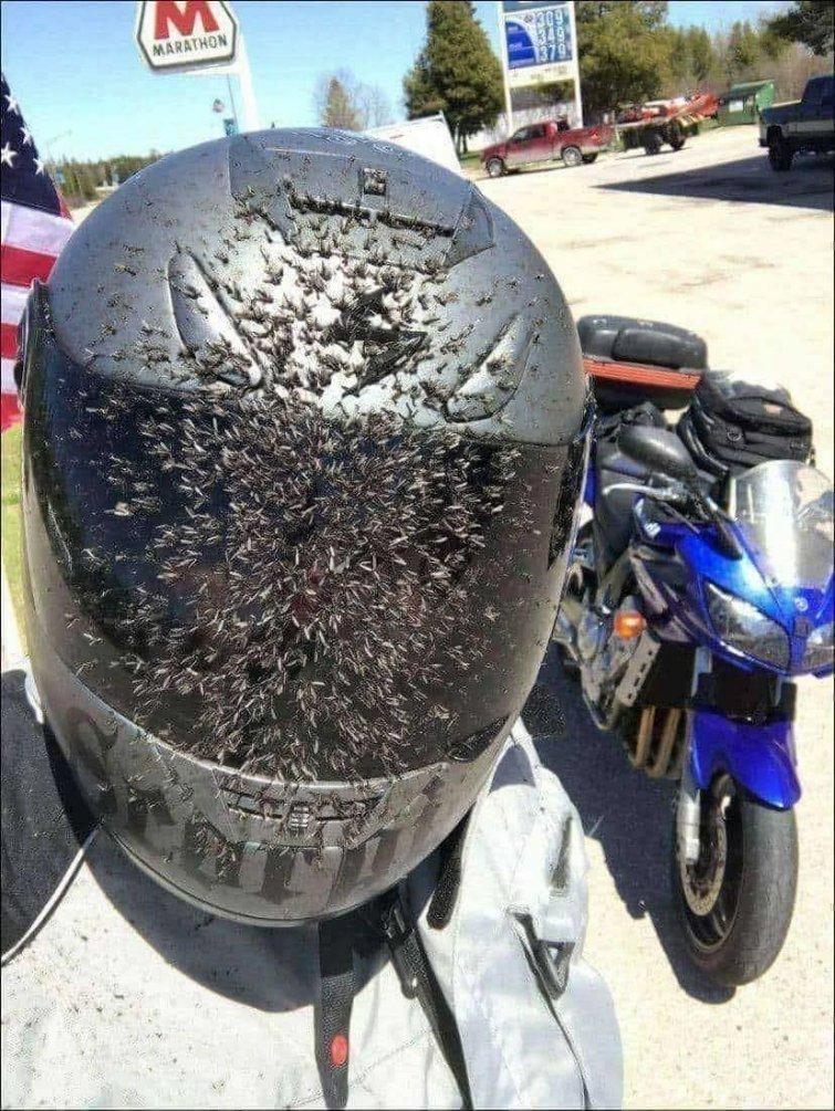 Когда все комары на трассе — твои в мире, подборка, прикол, странные вещи, удивительно, фото