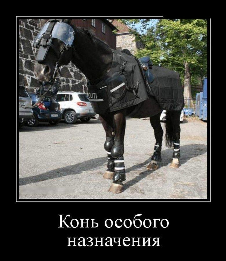 Конь особого назначения демотиватор, демотиваторы, жизненно, картинки, подборка, прикол, смех, юмор