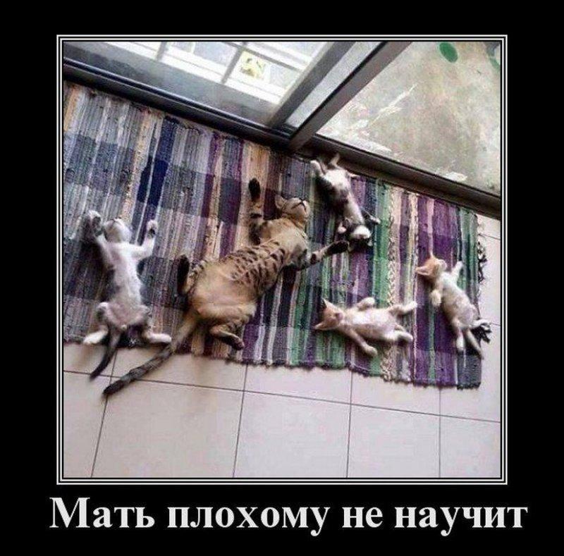 Мать плохому не научит демотиватор, демотиваторы, жизненно, картинки, подборка, прикол, смех, юмор