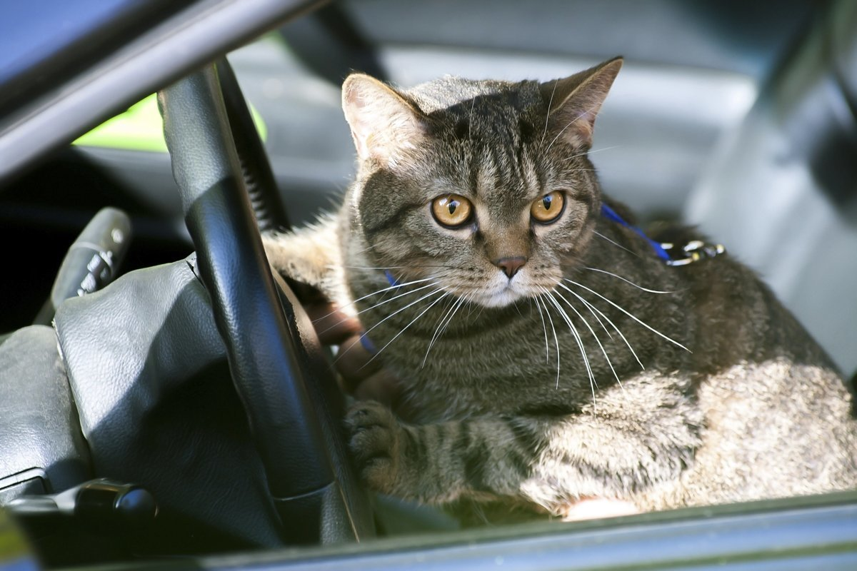 Смешные картинки с котами с надписями на машине