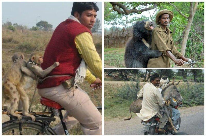 Индия - страна, где пассажиром может оказаться кто угодно funny foto, индия, интересно, смешно, юмор