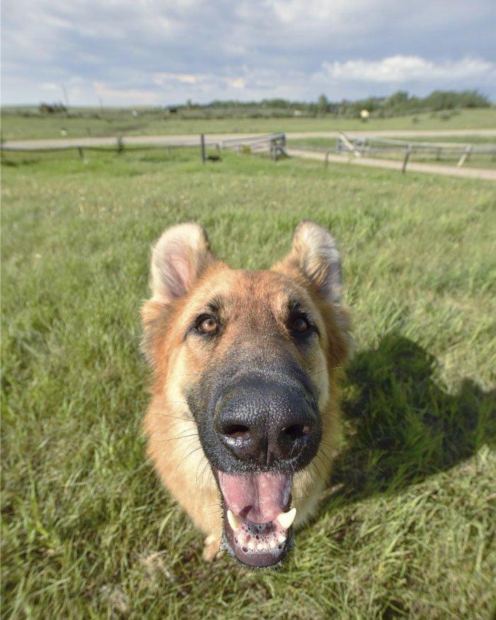 16. Титан животные, поиск, помощь, приют, собака, фотография, хозяин