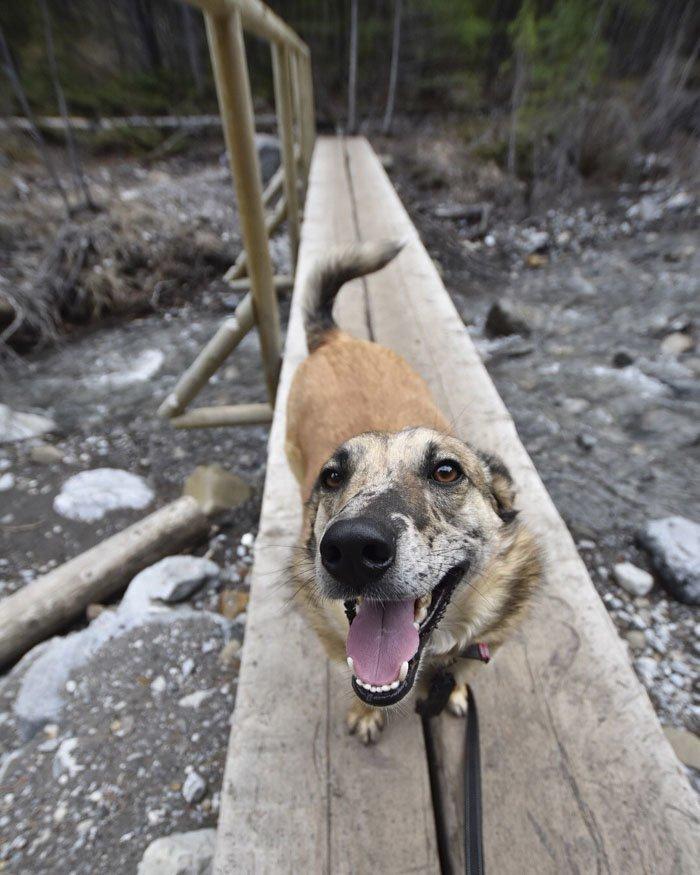 1. Поппи животные, поиск, помощь, приют, собака, фотография, хозяин