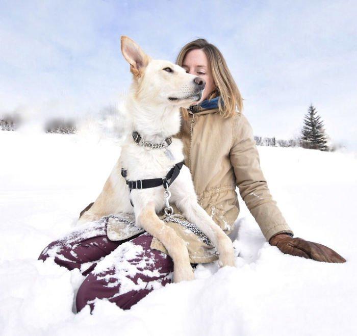 4. Мемфис животные, поиск, помощь, приют, собака, фотография, хозяин