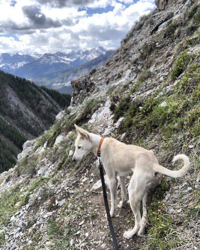 8. Бен животные, поиск, помощь, приют, собака, фотография, хозяин