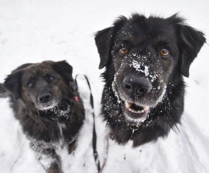 3. Сьерра и Дакота животные, поиск, помощь, приют, собака, фотография, хозяин