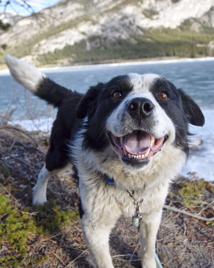 5. Гомер животные, поиск, помощь, приют, собака, фотография, хозяин
