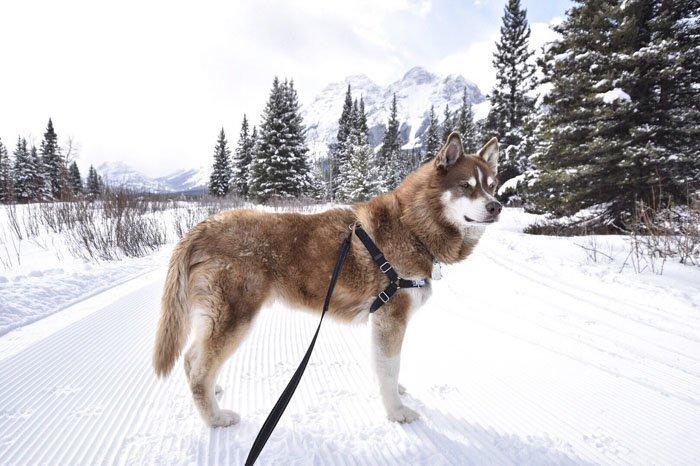9. Талус животные, поиск, помощь, приют, собака, фотография, хозяин