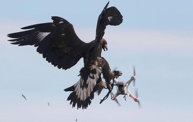 Трутень на службе у людей, или дрон спешит на помощь Фабрика идей, дроны, интересное, помощники, приспособили