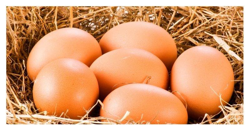 7 мифов о куриных яйцах вкусно, еда, куриное яйцо, мифы