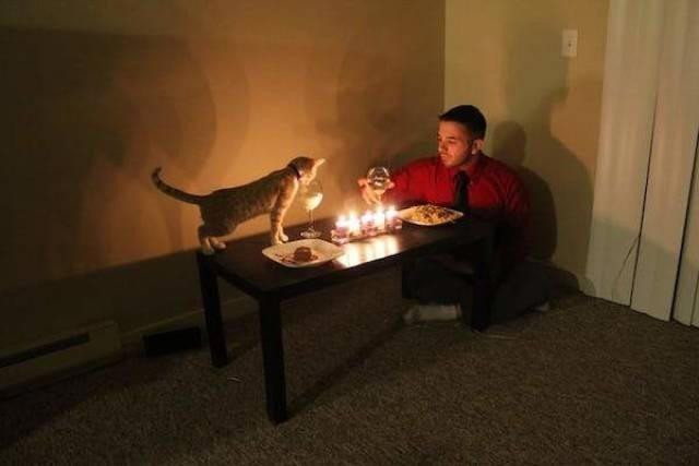Котики никогда не предадут люди, одинокие люди, одиночество, прикол, фото, хитрости, юмор