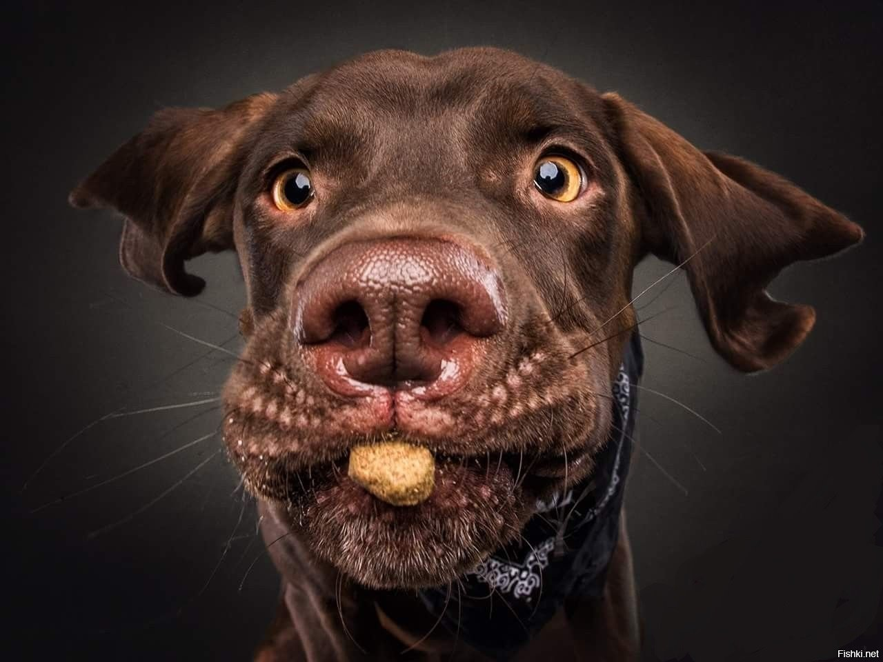Милые и смешные собаки, пытающиеся поймать корм
