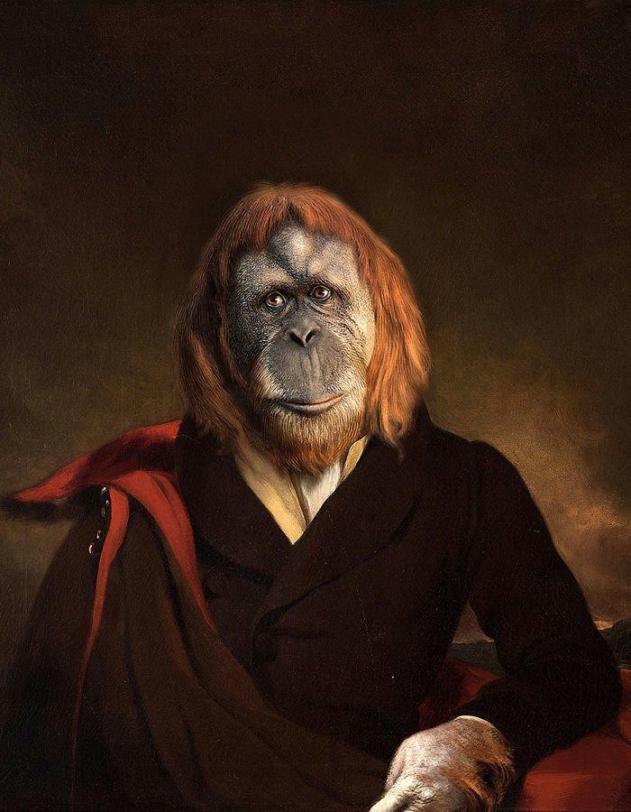11. Маркиза Орангутан возрождение, животные, необычное, портрет, портреты, портреты животных, проект, художник