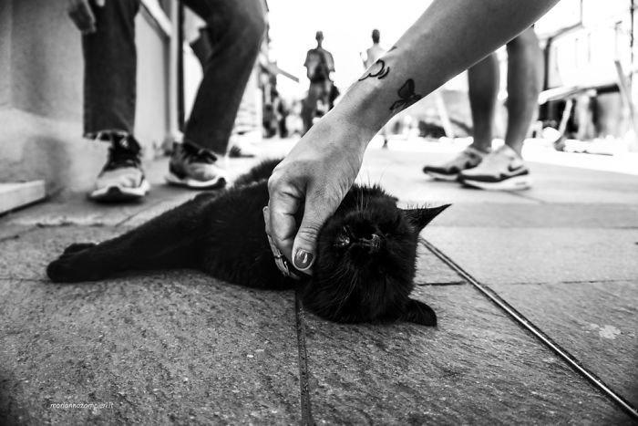 3. довольные мордашки, животные и люди, коты, кошаки, кошки, счастье, удовольствие, фотограф