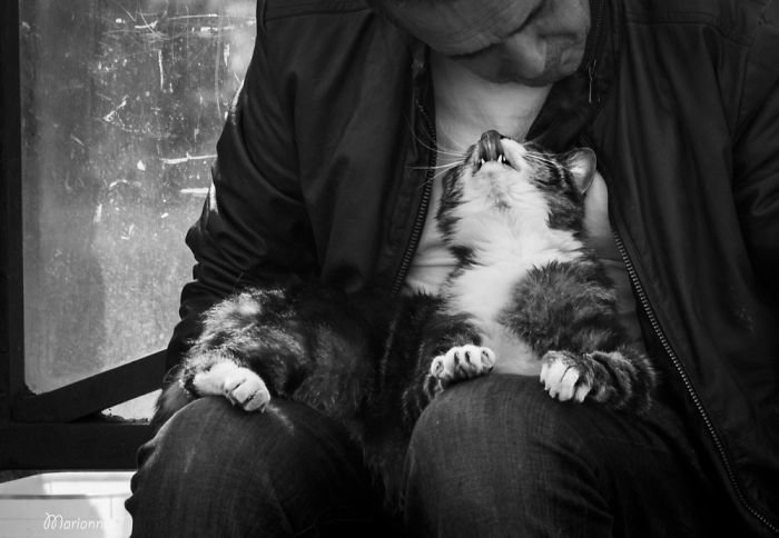 4. довольные мордашки, животные и люди, коты, кошаки, кошки, счастье, удовольствие, фотограф