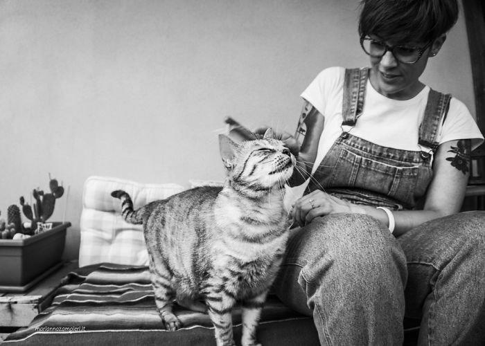 8. довольные мордашки, животные и люди, коты, кошаки, кошки, счастье, удовольствие, фотограф