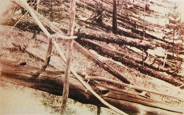 «Ореольный бурелом» в районе тунгусского события. По материалам экспедиции Л. Кулика, 1929 год. Пришельцы, Тунгусский метеорит, астероид, гипотезы, космическое тело
