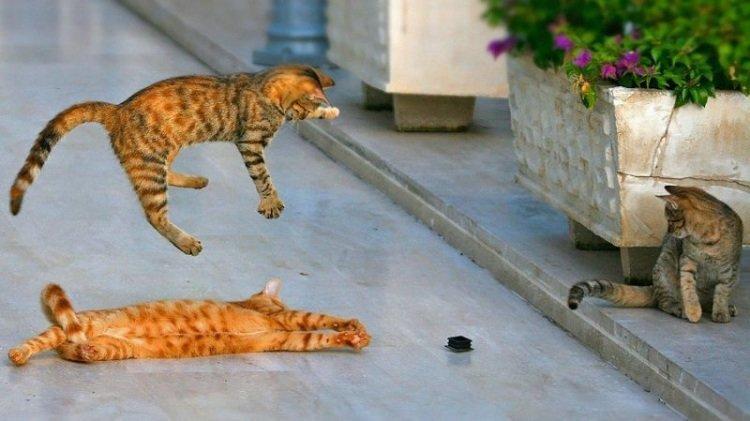 Фотографии снятые в нужный момент авария, коты, прикол