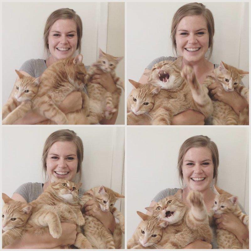 Свободу котам! день, животные, кадр, люди, мир, снимок, фото, фотоподборка