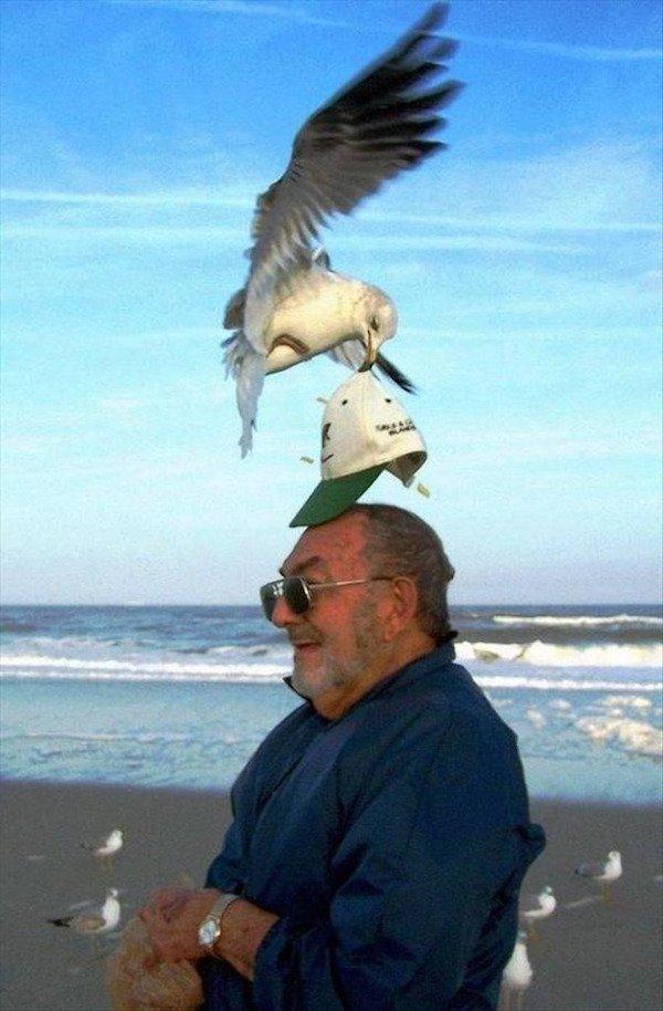 Легкое ограбление жизнь, люди, отдыхающие, пляж, фейл, юмор