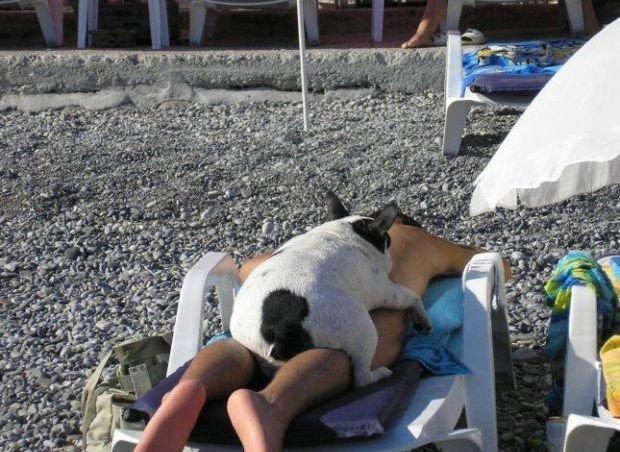 Лучшие друзья  жизнь, люди, отдыхающие, пляж, фейл, юмор