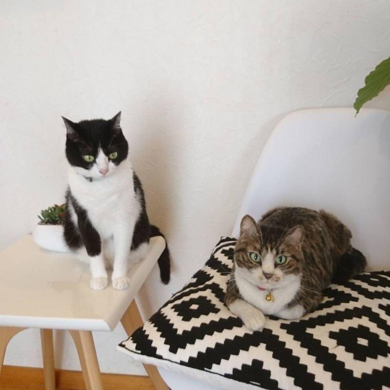 Войлочные животные, которых не отличить от настоящих Игрушки из войлока, Миру, япония