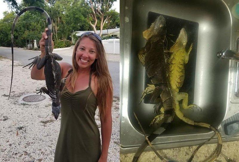 Охотница за игуанами: жительница Флориды ловит рептилий и добавляет их мясо в буррито буррито, женщина, игуана, мясо, охота, пища, сша, флорида