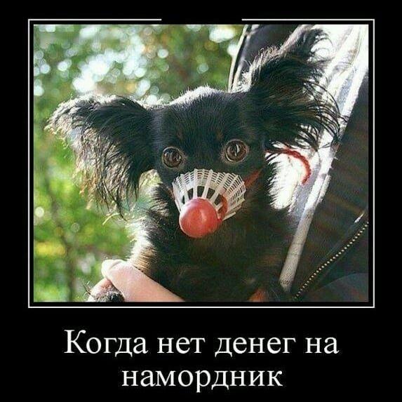 Свежая подборка демотиваторов, которые поднимут вам настроение демотиватор, демотиваторы, жизненно, картинки, подборка, прикол, смех, юмор