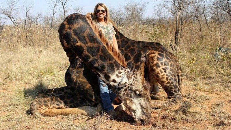 На фотографиях изображена Тэлли, стоящая рядом с мертвым жирафом животные, жираф, интернет, кошмар, люди, охота