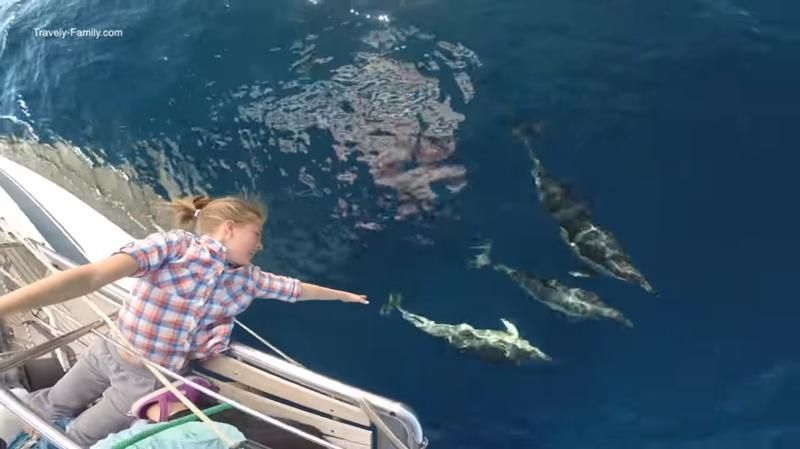 Но и развлечений на яхте хватает - это и Гонки с дельфинами  кругосветка, отчет, путешествие