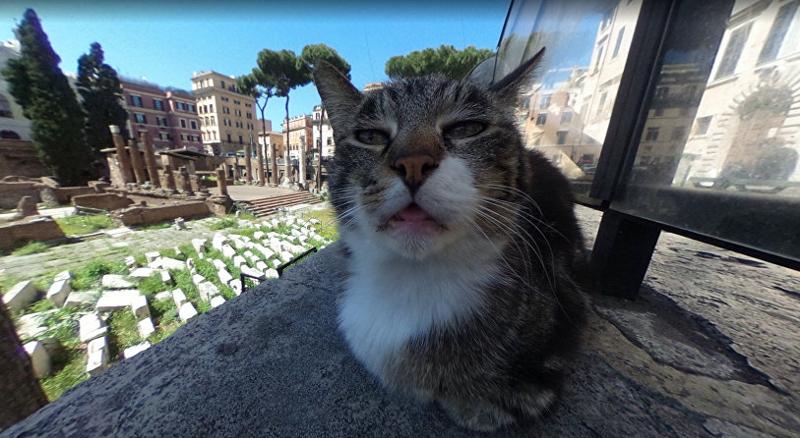 Google-карты сделали котика известным на весь мир ynews, Бездомные животные, гугл карты, животные, котик, приют, рим