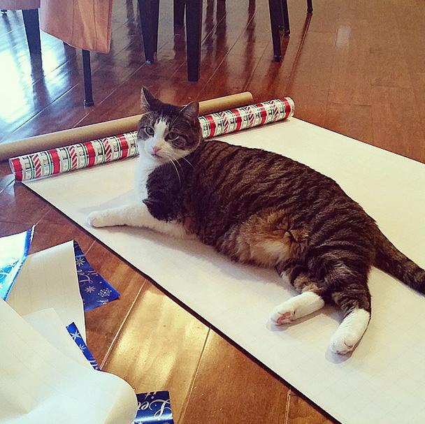"""16. """"Подарки? Какие подарки?! Кому нужны подарки, когда есть я?!!"""" домашний питомец, животные, кот, милота, юмор"""