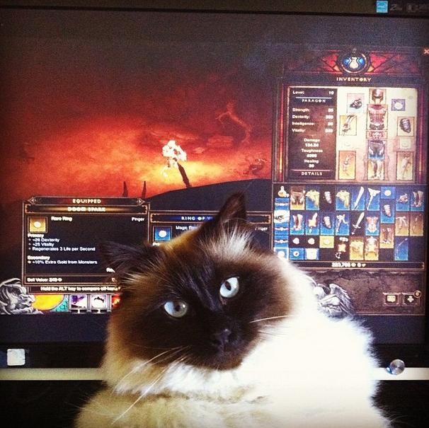 """11. """"Diablo III для лузеров, настоящие пацаны и девчонки играют в Path of Exile! домашний питомец, животные, кот, милота, юмор"""