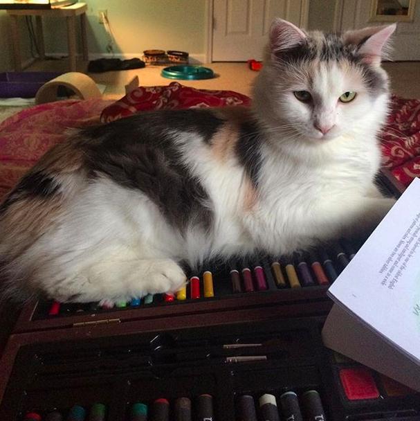 """12. Когда котейки делают """"это"""", они делятся на два типа. Представители или представительницы первого разыгрывают карту """"я тут босс"""" домашний питомец, животные, кот, милота, юмор"""