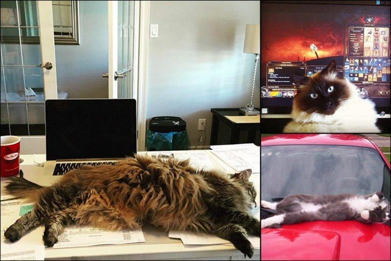 Я тут лежу, и не… волнует, или топ-19 котов-мастеров бросить кости домашний питомец, животные, кот, милота, юмор