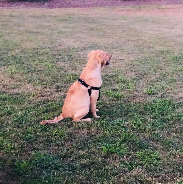 Вчера Пола опубликовала новую фотографию Тодда в парке, он быстро идет на поправку животные, золотистый ретривер, история
