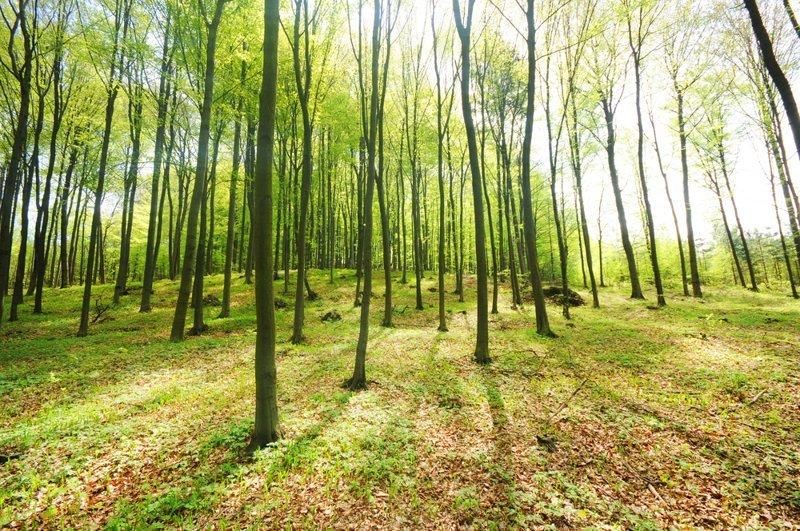 Штраф за уборку леса дача, дачники, законы, картофель, туалет, штраф