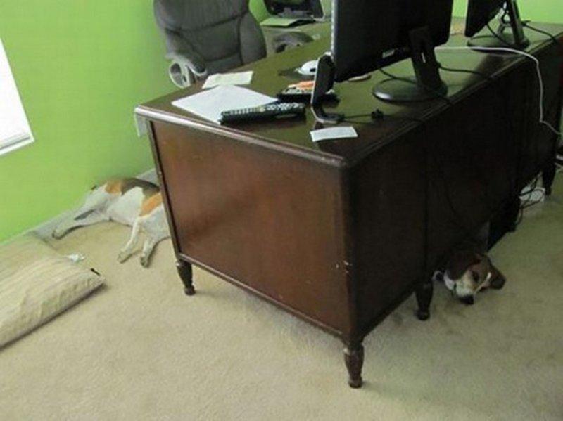 Собака, которая нашла червоточину в ткани пространства-времени взглянуть дважды, когда увидел это, прикол, юмор