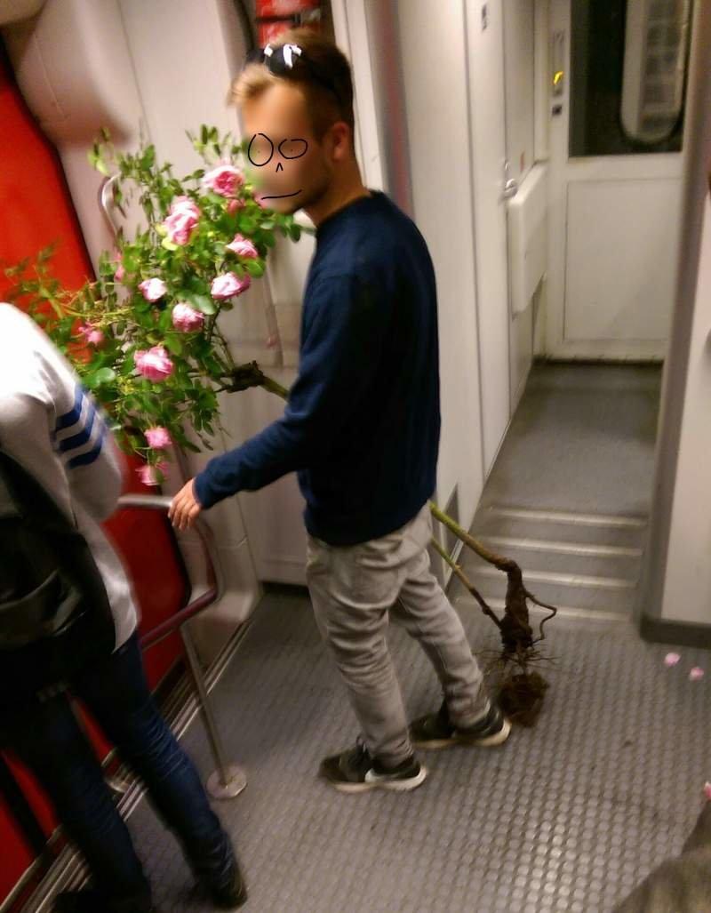 Сорвал розы для любимой день, животные, кадр, люди, мир, снимок, фото, фотоподборка