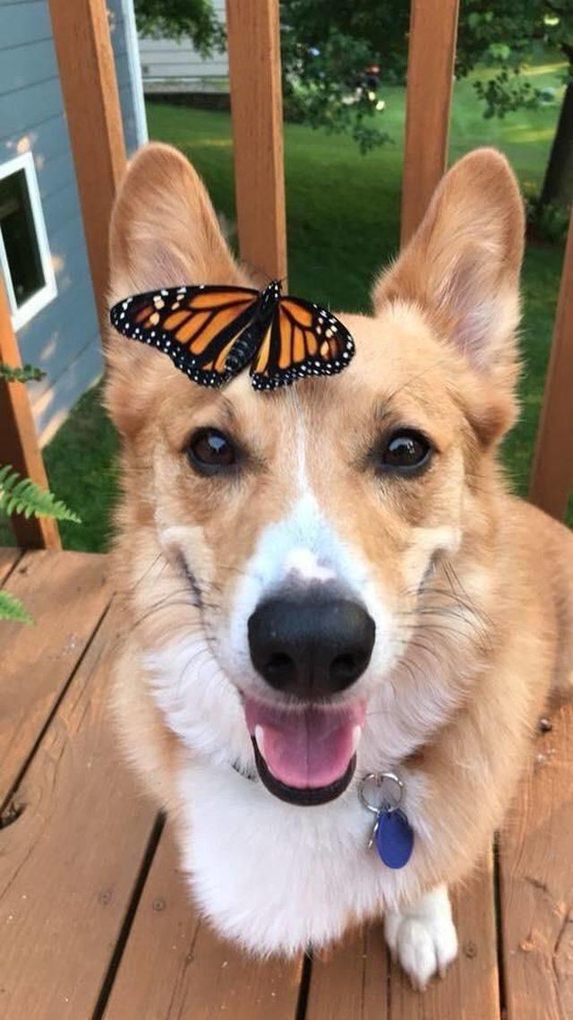 Даже бабочку покорил своей улыбкой день, животные, кадр, люди, мир, снимок, фото, фотоподборка