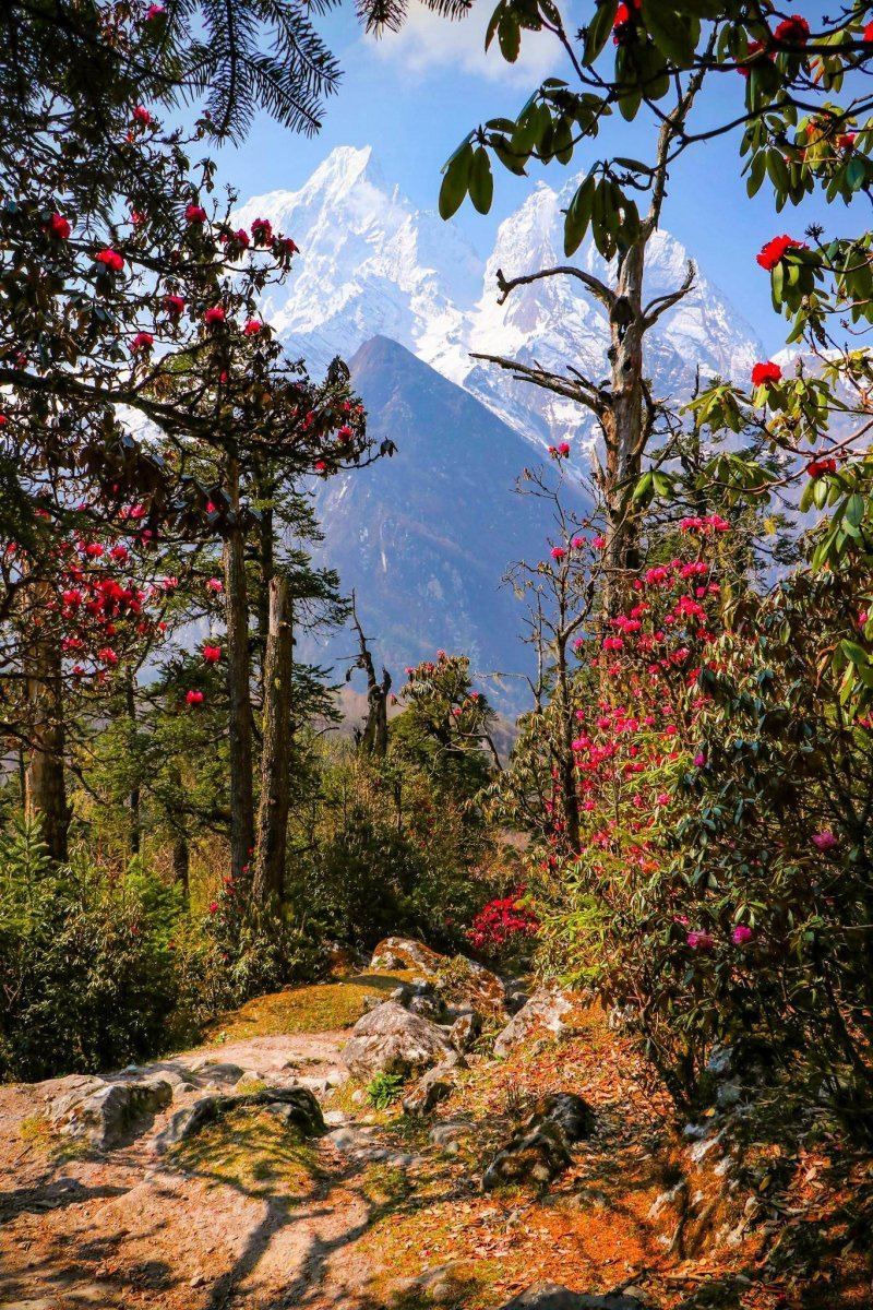 Гималаи, Непал день, животные, кадр, люди, мир, снимок, фото, фотоподборка