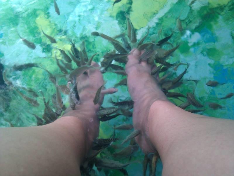 Как рыбный педикюр оставил девушку без ногтей в мире, история, люди, ногти, педикюр, рыба