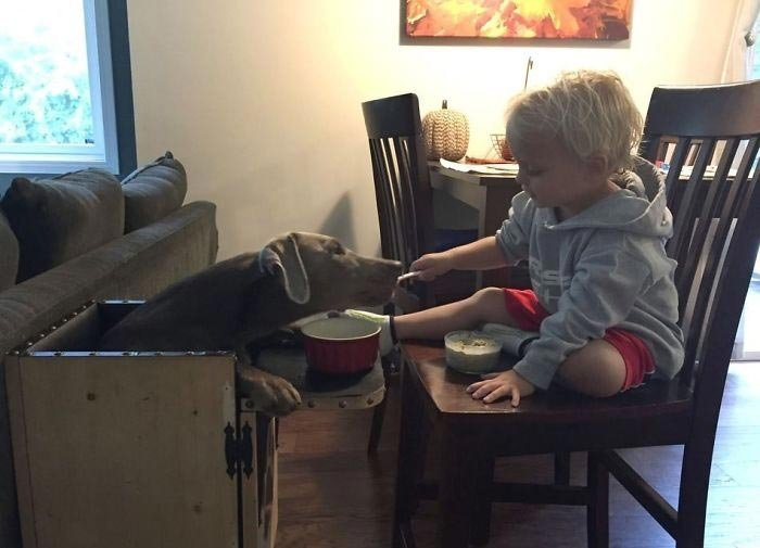 Благодаря этому стулу пище проще достигнуть желудка и не застрять в пищеводе в мире, добро, животные, забота, люди, собака