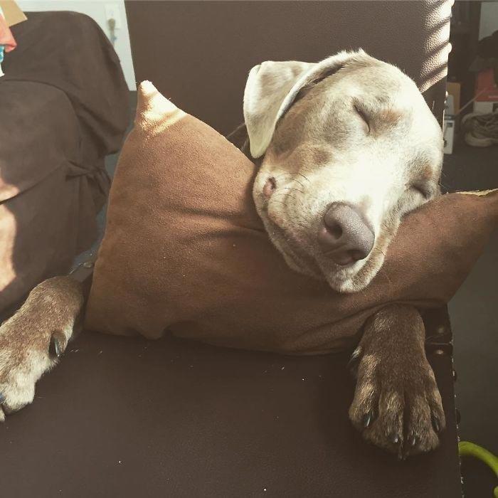 Состояние щенка требует большой помощи от ее владельцев, но семья Салливан рада заботиться о четвероногом члене их семьи в мире, добро, животные, забота, люди, собака